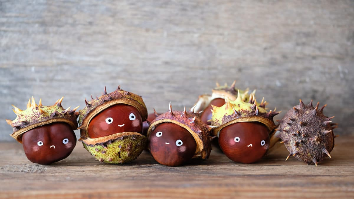 Bricolage d'automne facile avec des marrons, activités manuelles et décoration avec des marrons