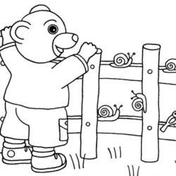 coloriage petit ours brun et la nature escargot et oiseaux
