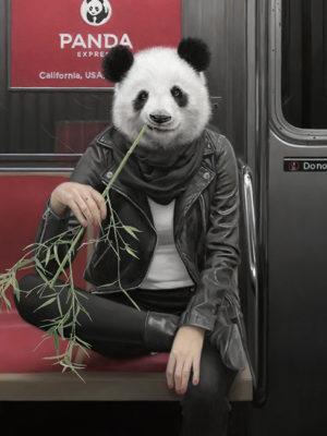 panda dans le métro de new york mattehew Grabelsky