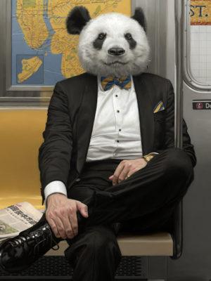 panda new york peinture à l'huile mattehew Grabelsky