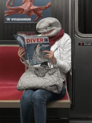tableau requin mattehew Grabelsky